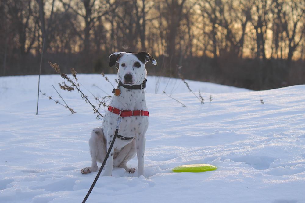 xanax chien modèle
