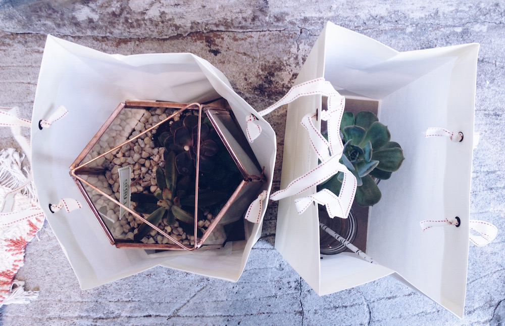 workshop terrarium anthropologie